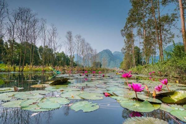 Hoa Súng trên dòng sông Yến