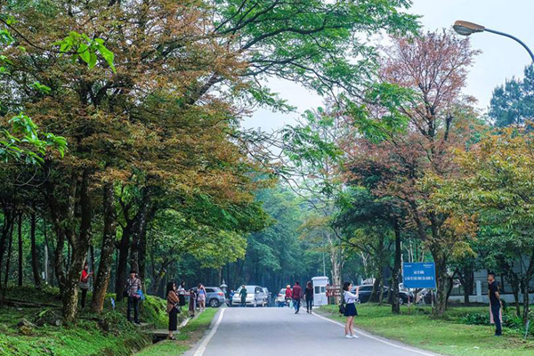 Vườn Quốc gia Ba Vì mang vẻ đẹp lôi cuốn đã trở thành điểm hấp dẫn nhất ở Ba Vì.