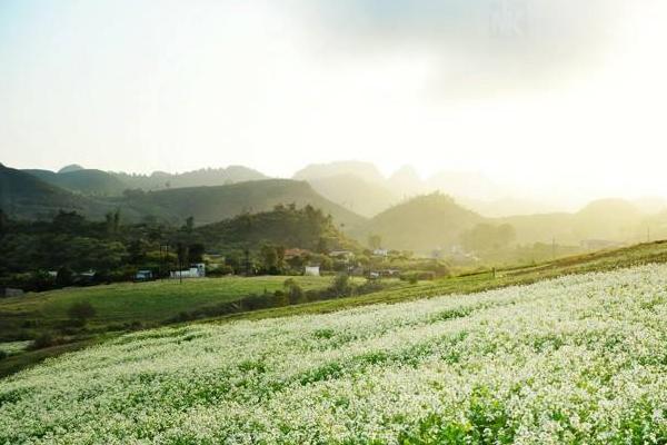 Cao nguyên Mộc Châu quyến rũ mùa hoa ban