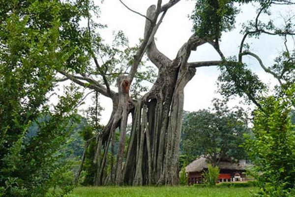 Khu di tích xã Tân Trào là một điểm du lịch ấn tượng.