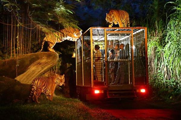 Công viên thú đêm (Night Safari)