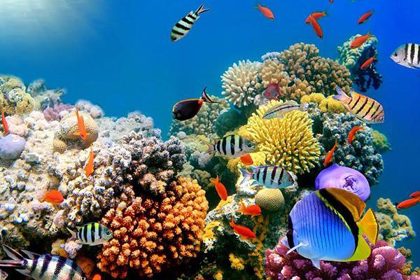 Công viên đại dương (Underwater World)